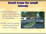small trees for small islands