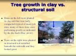 tree growth in clay vs structural soil