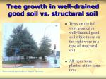 tree growth in well drained good soil vs structural soil