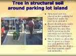 tree in structural soil around parking lot island