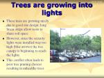 trees are growing into lights