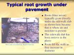 typical root growth under pavement