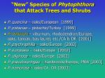 new species of phytophthora that attack trees and shrubs