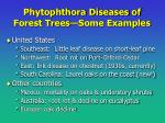 phytophthora diseases of forest trees some examples