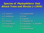 species of phytophthora that attack trees and shrubs 1999