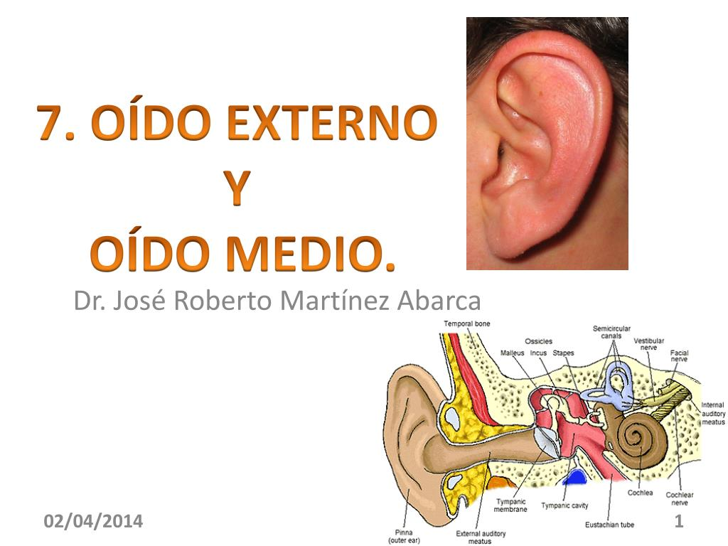b575c08ec47 PPT - Dr. José Roberto Martínez Abarca PowerPoint Presentation - ID ...