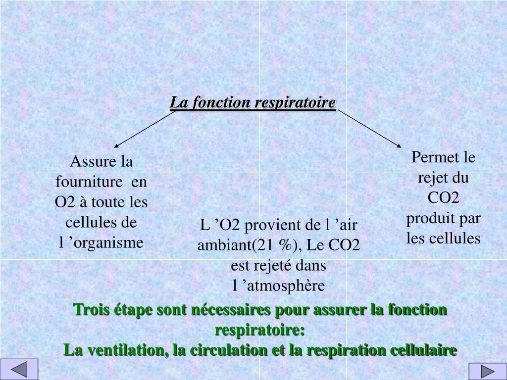 La fonction respiratoire