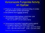voriconazole fungicidal activity on hyphae