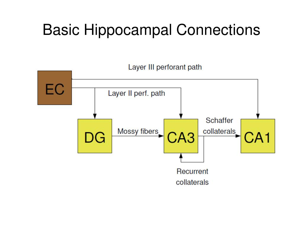 Basic Hippocampal Connections