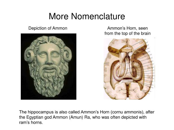 More nomenclature