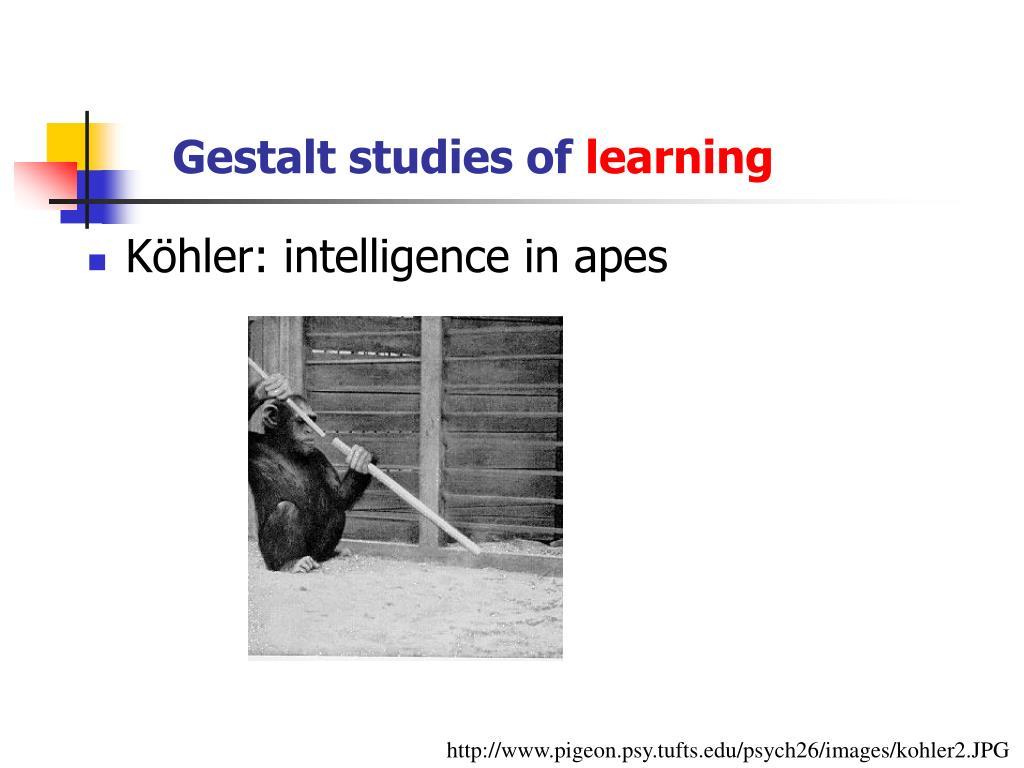 Gestalt studies of