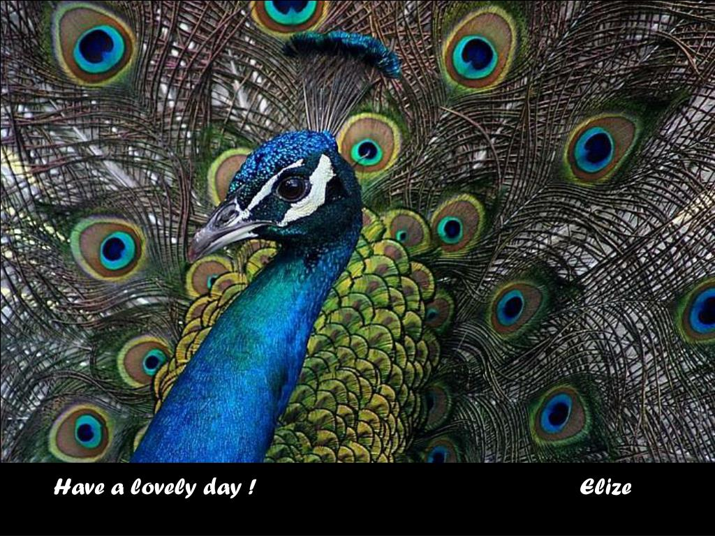 Have a lovely day !                                                   Elize