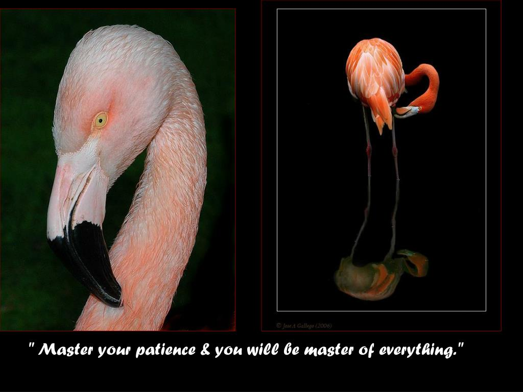 """ Master your patience & you will be master of everything."""