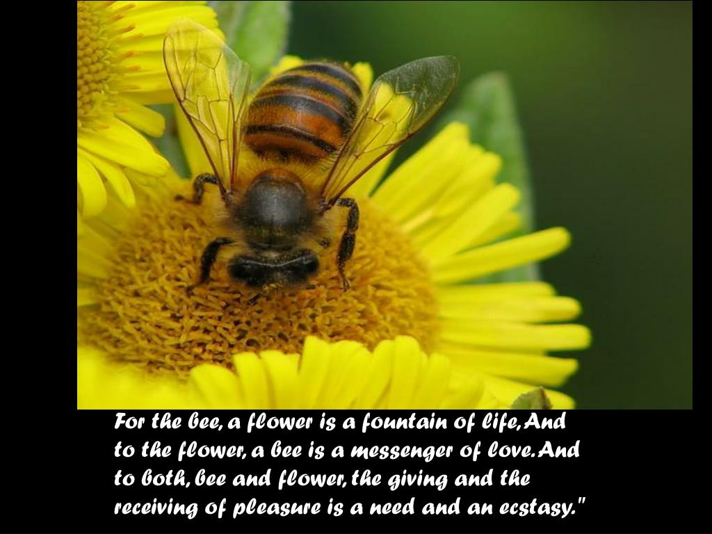 For the bee, a flower is a fountain of life, And to the flower, a bee is a messenger of love. And to both, bee and flower, the giving and the receiving of pleasure is a need and an ecstasy.""