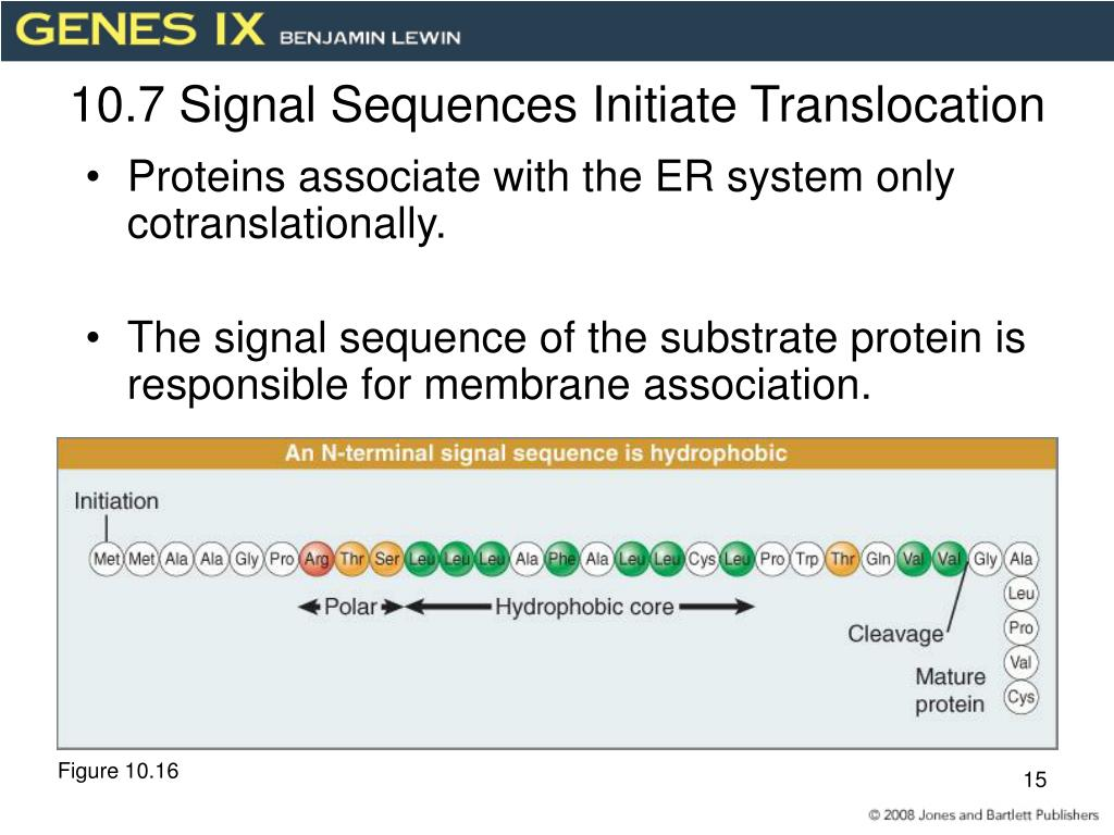 10.7 Signal Sequences Initiate Translocation