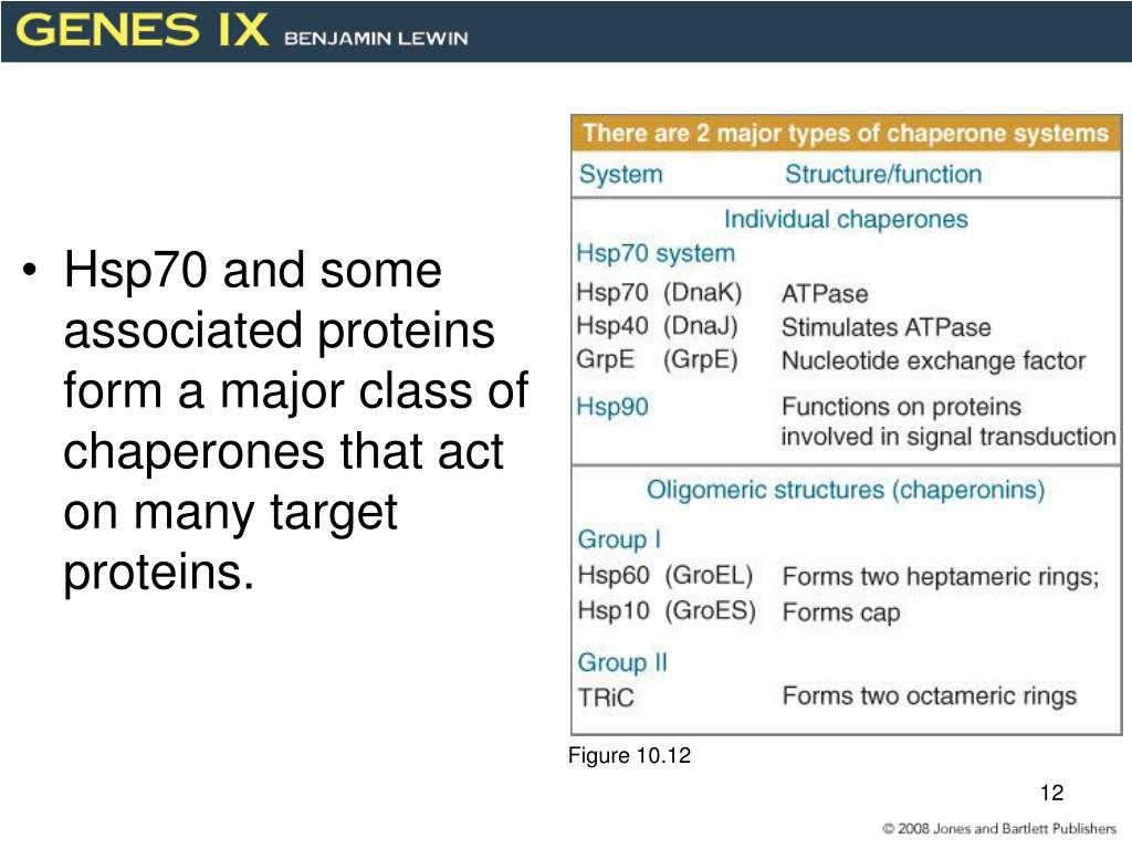 Hsp70 and some associated proteins form a major class of chaperones that act on many target proteins.