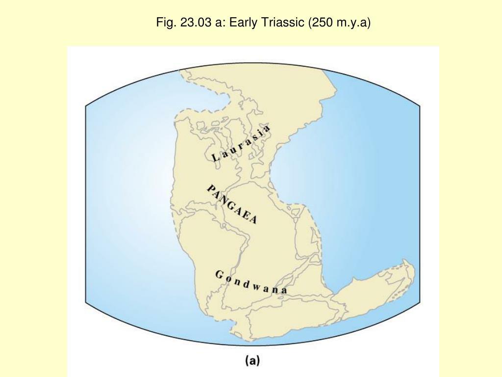 Fig. 23.03 a: Early Triassic (250 m.y.a)