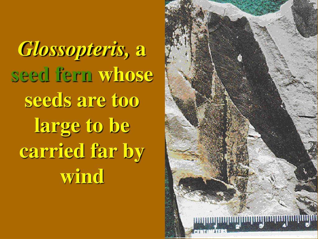 Glossopteris,