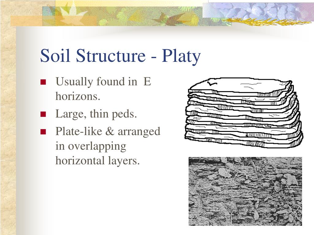 Soil Structure - Platy