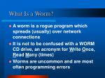 what is a worm