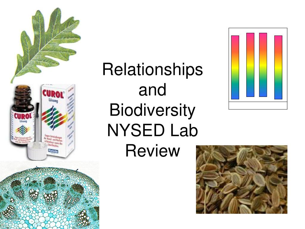 relationships and biodiversity nysed lab review l.