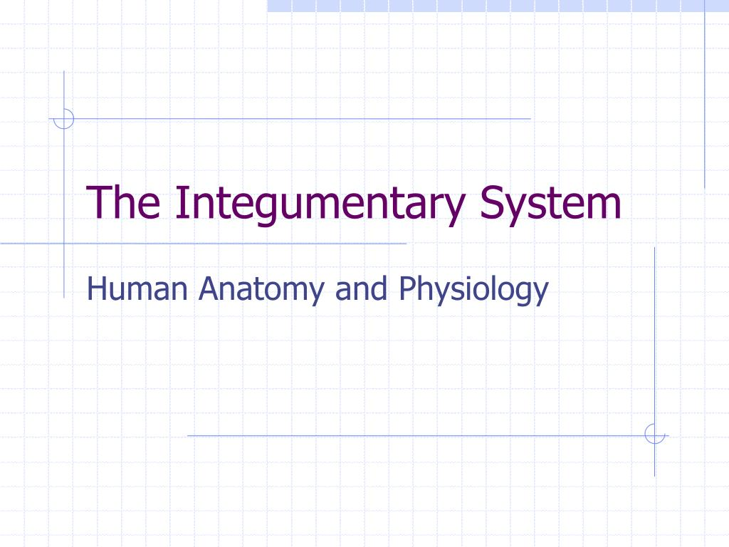 PPT - The Integumentary System PowerPoint Presentation - ID:775079