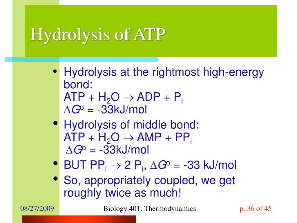 Hydrolysis of ATP