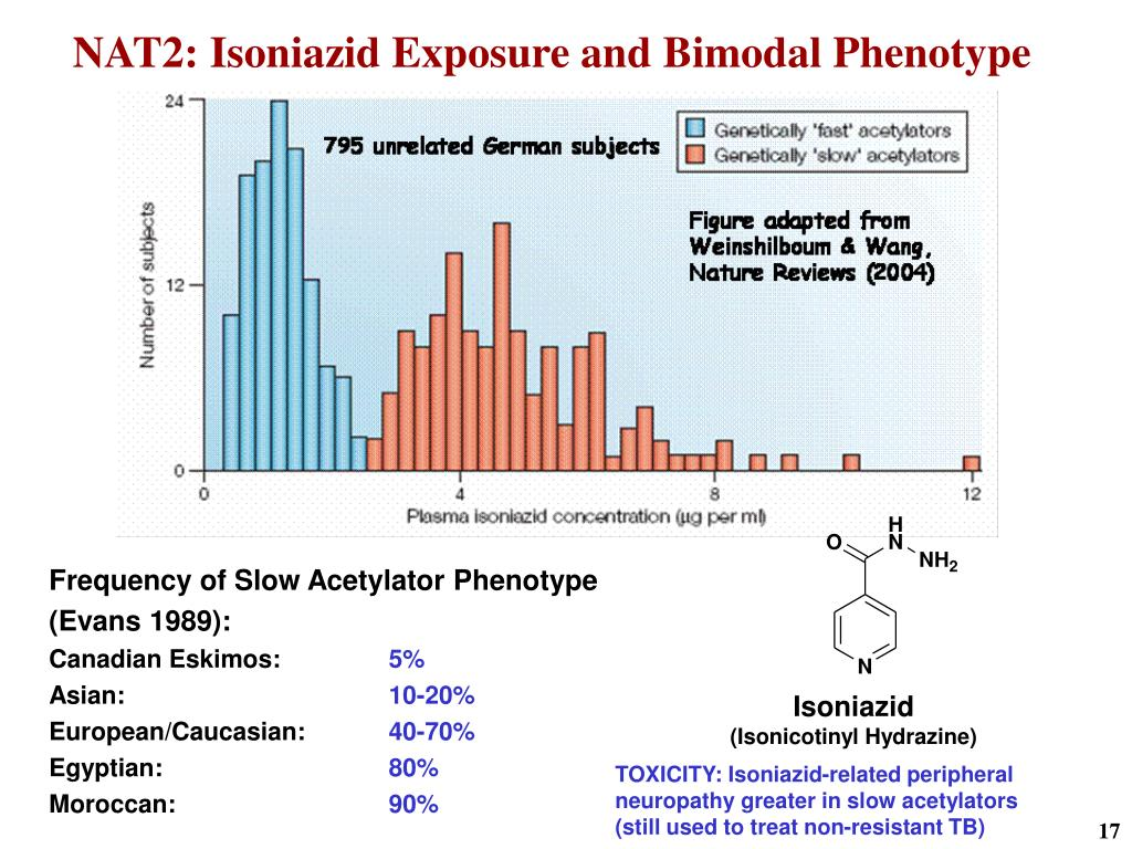 NAT2: Isoniazid Exposure and Bimodal Phenotype