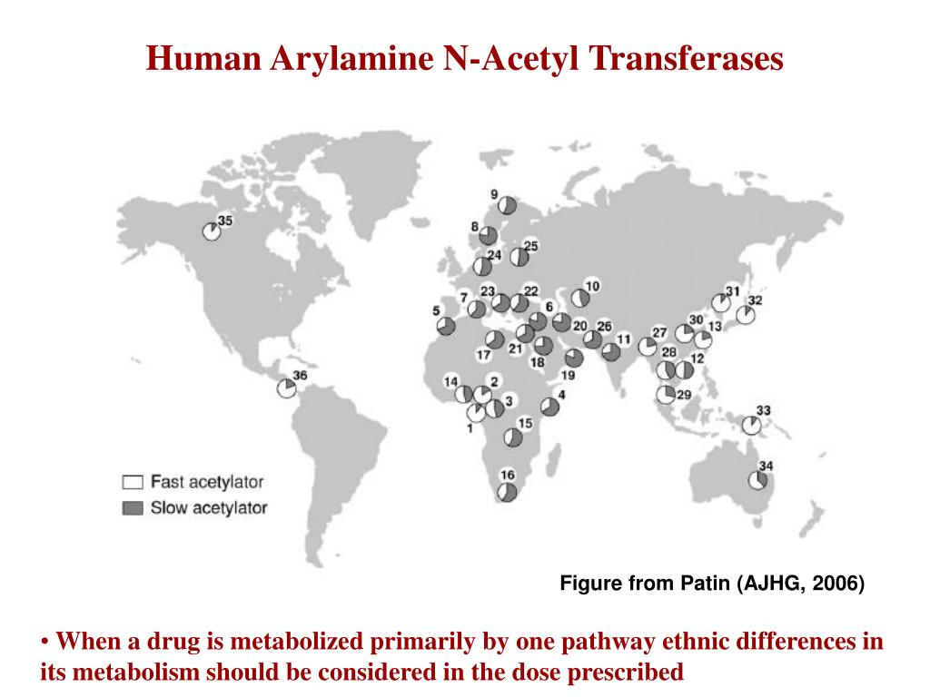 Human Arylamine N-Acetyl Transferases