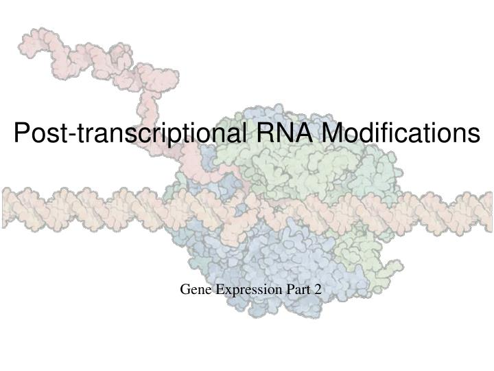 post transcriptional rna modifications n.