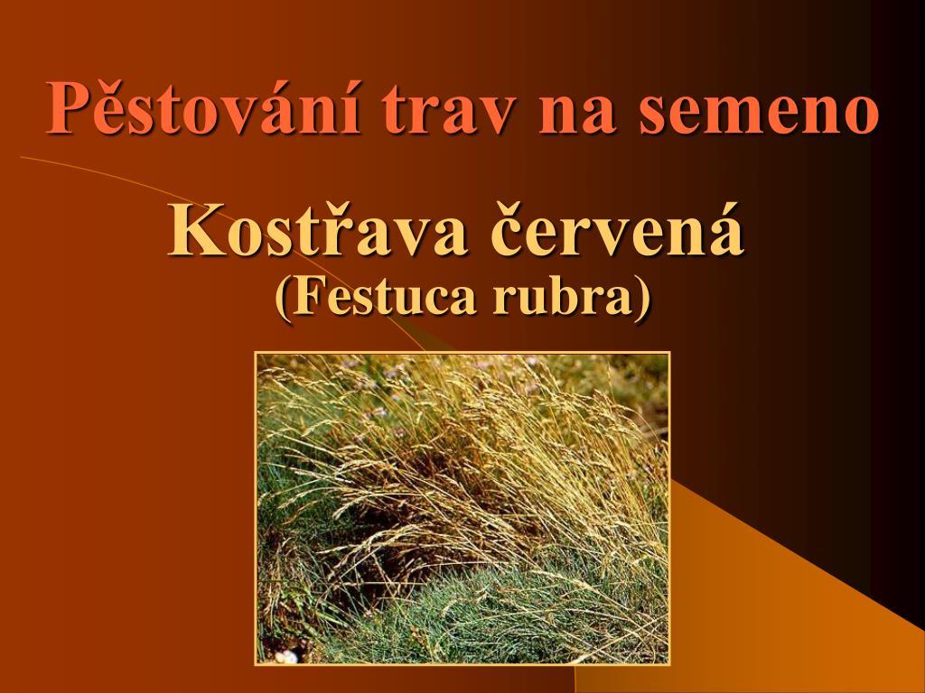 Pěstování trav na semeno