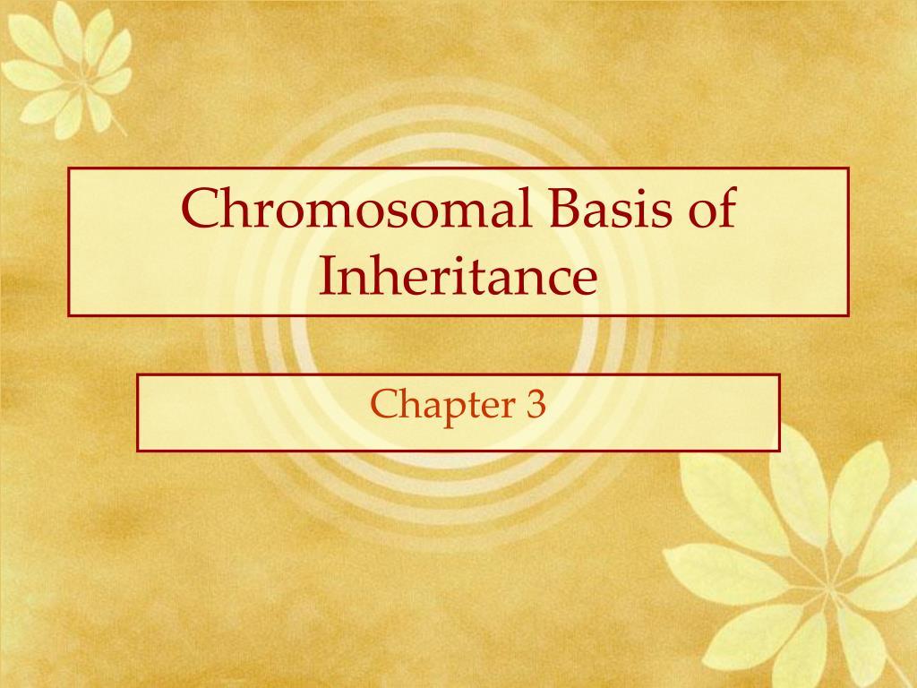 chromosomal basis of inheritance l.