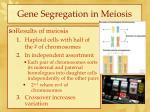 gene segregation in meiosis