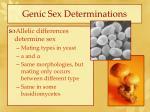 genic sex determinations