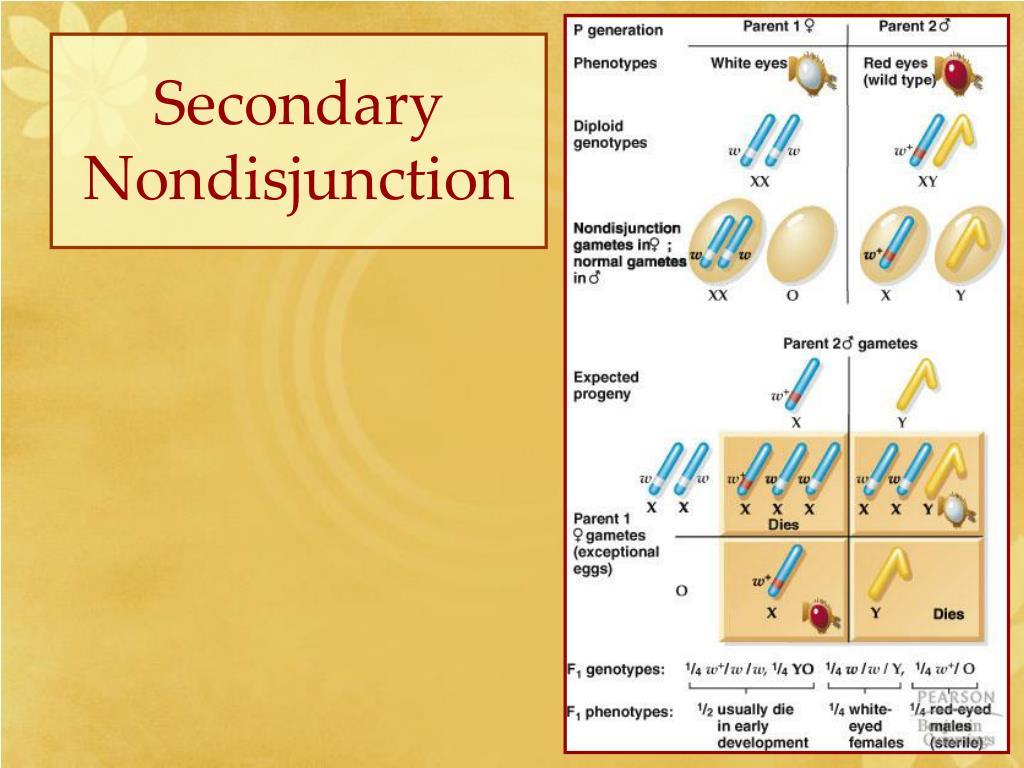 Secondary Nondisjunction