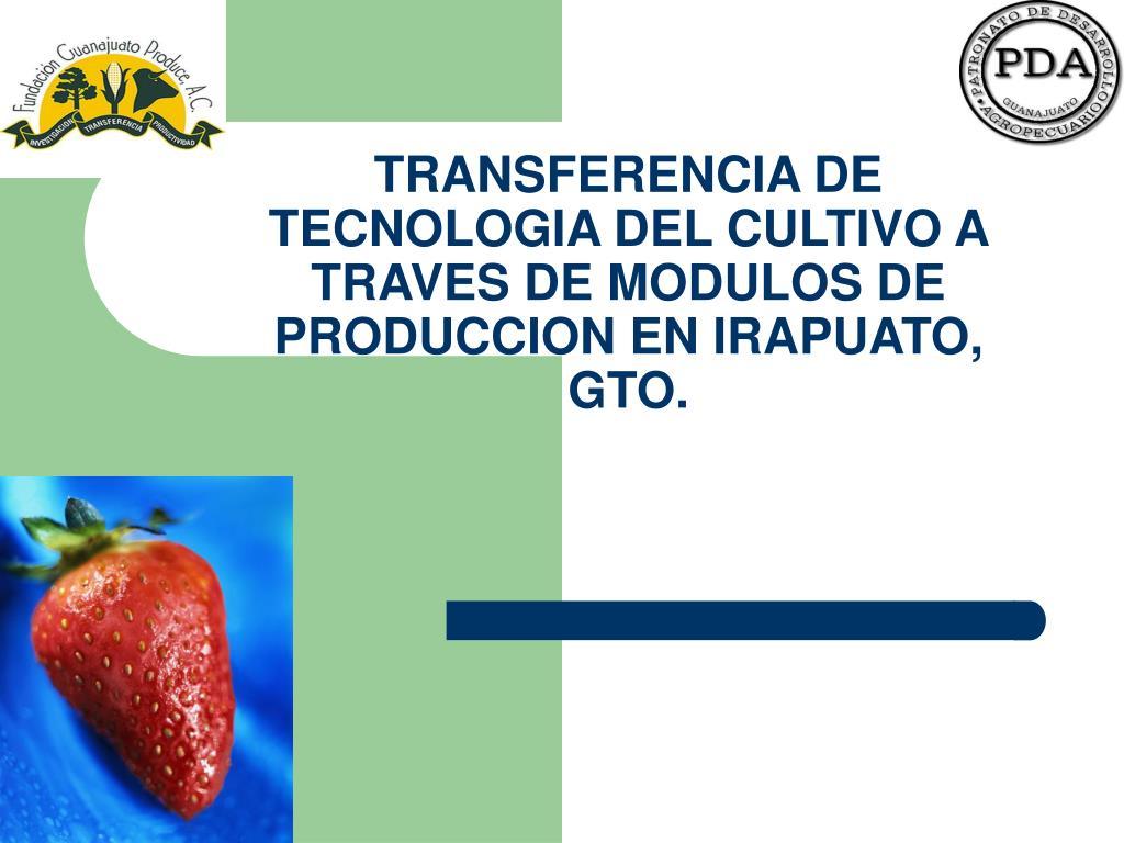 transferencia de tecnologia del cultivo a traves de modulos de produccion en irapuato gto l.