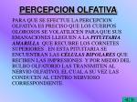 percepcion olfativa