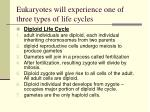 eukaryotes will experience one of three types of life cycles11