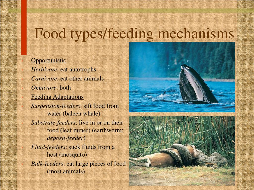 Food types/feeding mechanisms