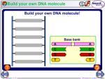 build your own dna molecule