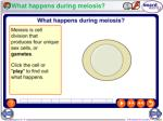 what happens during meiosis1