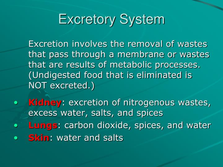 excretory system n.