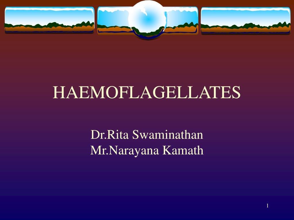 haemoflagellates l.