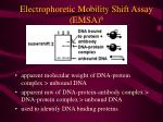 electrophoretic mobility shift assay emsa 623