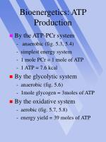 bioenergetics atp production