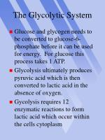 the glycolytic system12