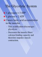 the glycolytic system13