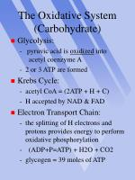 the oxidative system carbohydrate
