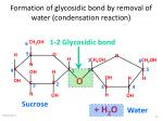 formation of glycosidic bond by removal of water condensation reaction20