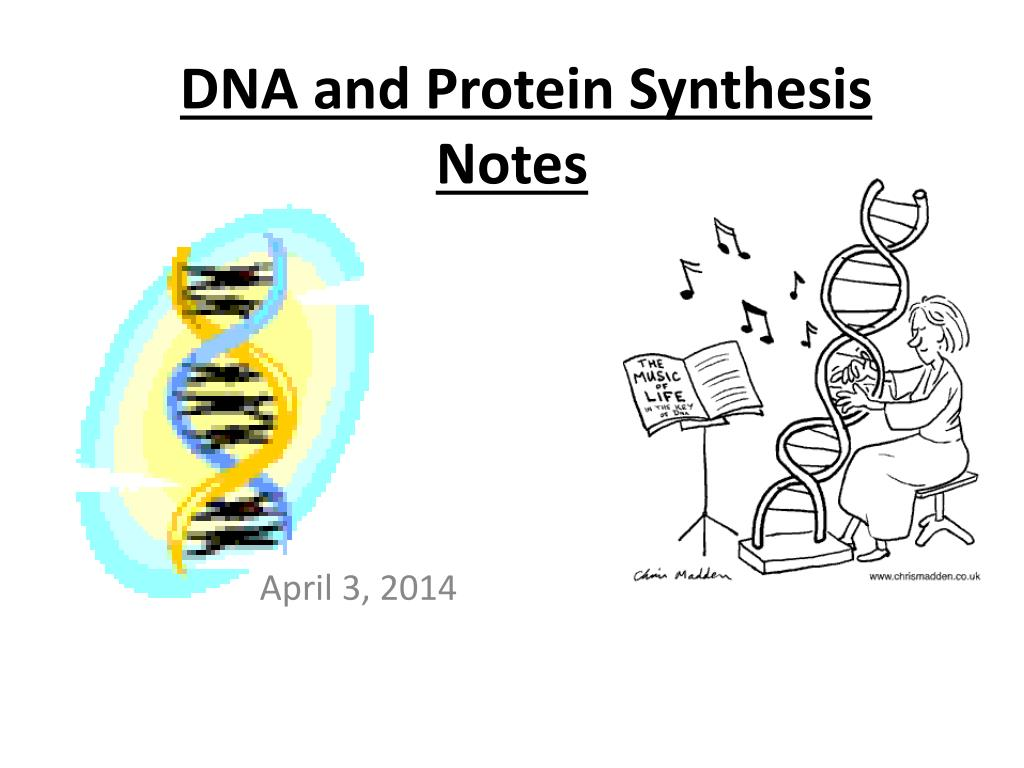 dna and protein synthesis notes l.